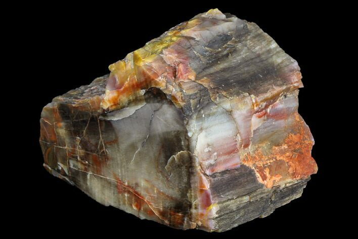 "4.9"" Vibrantly Colored, Polished Petrified Wood Section - Arizona"